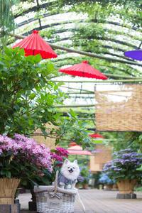 紫陽花 - 横浜イングリッシュガーデン - - 一期一会