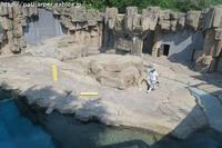 2017年6月 王子動物園 その1 - ハープの徒然草