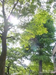 新緑の井の頭公園 - ぶうぶうず&まよまよの癒しの日記