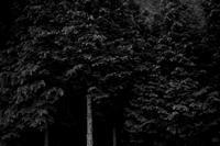 木々 - YUKIPHOTO/平松勇樹写真事務所