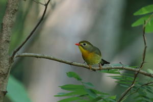今日の鳥見(2017年6月23日) - ほとんど野鳥写真日記