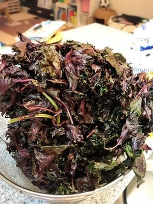 紫蘇シロップ作り - 藤が丘、長久手の小さなお料理サロン BELINDAより...