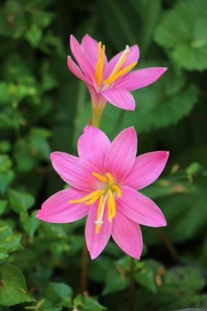 雨を待って咲く花 - さいたま日記