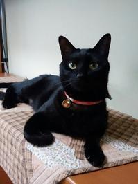 やはり空梅雨 - 黒猫瓦版
