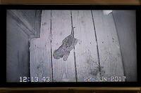 モニターで見るユキヒョウの親子 - 動物園放浪記
