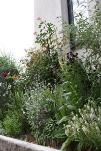 6月の東側花壇 - 日々の暮らしの中で見つける さりげない幸せ
