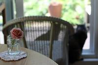 雨上がりとヤマアジサイ - 小さな森のキキとサラ