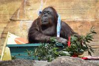 いい湯だな〜(?)ジプシーさん - 今日ものんびり動物園