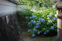 紫陽花風景 - 花と風景 Photo blog