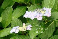 梅雨 2 - 螺子花便り