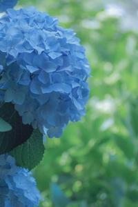 Blue Blue - 気ままにお散歩