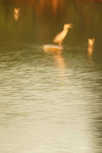 鳥 - 日本写真かるた協会~写真が好きなオッサンのブログ~