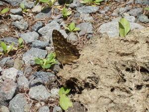 蝶々はすごい - あるちゅはいま日記