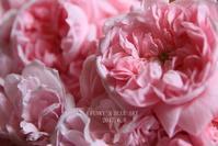 薔薇*2017・STORY11-2 花盛り***だった頃(6月5日~6日) - FUNKY'S BLUE SKY