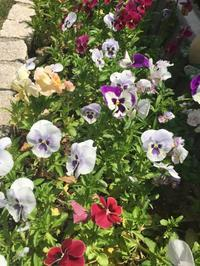 In an eary Summer garden 1 - Our Cozy Life -Let's make it happen-
