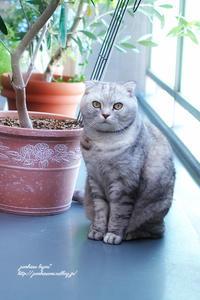 今日の猫 - jumhina biyori*