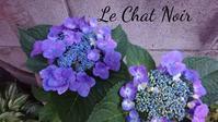 何気なく植えられている紫陽花 - クラフトもティータイムも楽しみましょう。東京大田区、駅前のデコパージュ教室・ソスペーゾトラスパレンテ(3Dデコパージュ)、クラフト教室Le Chat Noir(ル シャノワール)