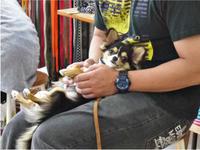 犬のしつけ方教室 6/22 - SUPER DOGS blog