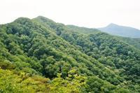 赤城山 レンゲツツジ - いぐさん流 山と花の写真(富士山)