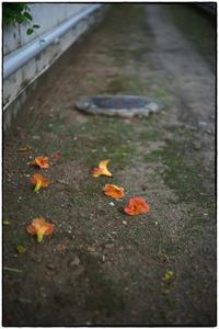 散歩向日町-82 - Hare's Photolog