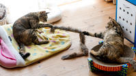 ニセモノの毛皮の紐 - 猫と夕焼け