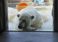 6月11日の東山動植物園のサスカッチやリアン - 黄金絹毛鼠(コガネキヌゲネズミ)