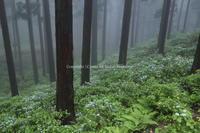 森の妖精たち - ratoの大和路