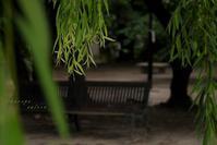 木 陰 - フォトな日々