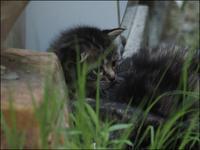 ボボとその仔猫たち_V - L'Ambiance du Midi
