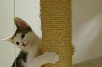 テレビの猫にも反応♡ - オール電化生活!カノンとキアと猫ちゃんと愉快な仲間