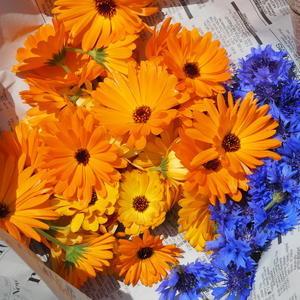 収穫・収穫・収穫 - sola og planta ハーブとお花のお庭日記