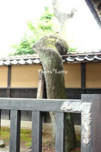 山形!ふしぎ発見♪Vol. 1 - Photo*Latte