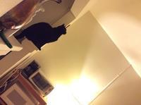 観察隊員:黒猫編 - にゃんこと暮らす・アメリカ・アパート