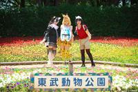キキワンさん、なおきさん、櫻ちぃさん[2017/6/4 COSSAN at 東武動物公園] - 【コスプレ】  ぱるぱる通信局  【写真】
