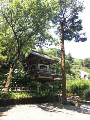 鎌倉探訪♪ - ハナとお散歩!