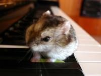 ピアノの上のミミたん (Criceto)  - エミリアからの便り