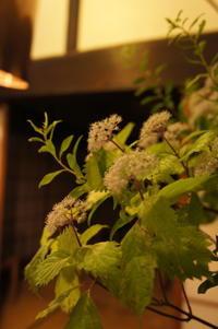雨降る晩、山紫陽花の香 - Groseille グロゼイユ~四季のお庭とぼちぼちお花活動~