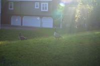 Canada Goose - Casa de NOVA in Minnesota
