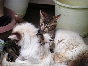 庭猫 - 工房もくきち・・・日々の暮らし