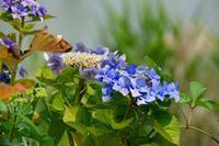 杁ヶ池公園の紫陽花のデジブックを公開しました。 - 写真撮り隊の今日の一枚2