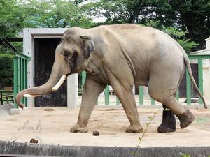 王子動物園 6月18日 その3 - お散歩ふぉと