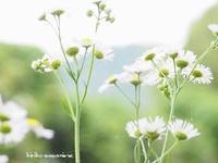 雨粒 - PHOTO俳句ブログ