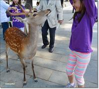 【806】娘一家との小旅行 奈良へ - Yamyam町一丁目