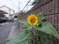 ご近所散歩 - じるかぼ日記2