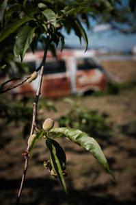 居心地のよい桃畑に棲みついたハイゼット - Film&Gasoline