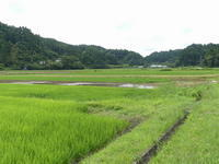 水を切る田と田植えをする田 - 千葉県いすみ環境と文化のさとセンター