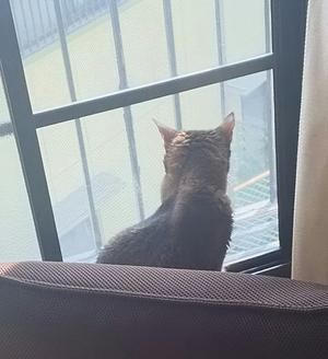 靴下を履いた猫…ちょっと復活(*´∀`) - ごまめ家族日記