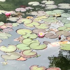 うな丼のしげ吉からのモネの池ツーリング - 夏への扉~フェルディナントに~