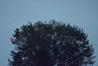 夜の樹木 - 日本写真かるた協会~写真が好きなオッサンのブログ~