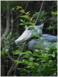 千葉市動物公園‐5   085) - 趣味の写真 ~オリンパスE-M1MarkⅡとE-M1、E-5とたまにフジフィルムXZ-1も使っています。~